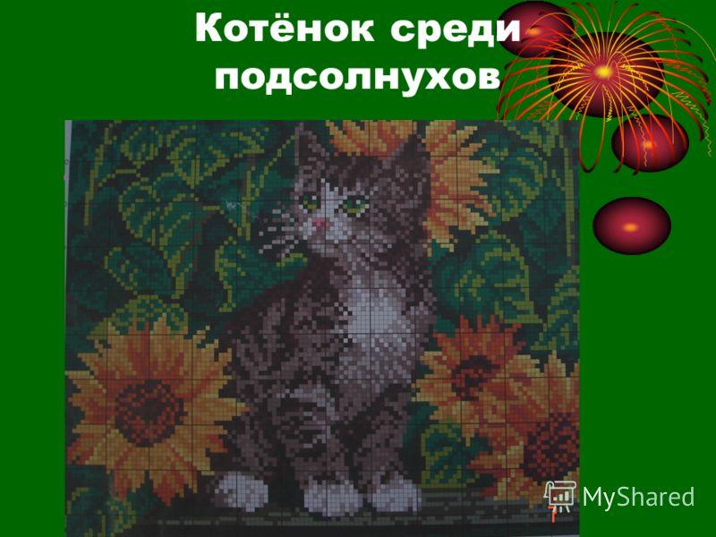 Котёнок среди подсолнухов