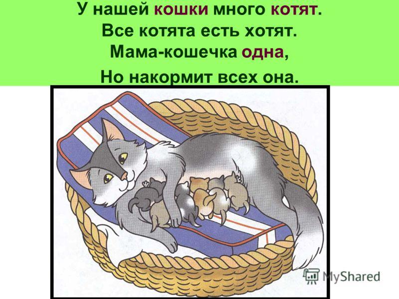 У нашей кошки много котят. Все котята есть хотят. Мама-кошечка одна, Но накормит всех она.