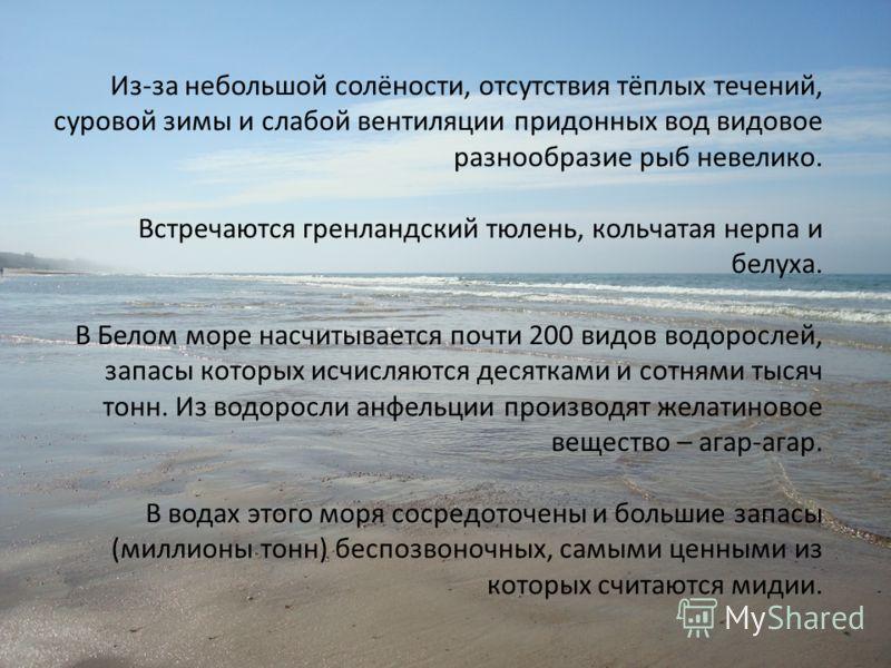 Характеристика моря. Площадь = 90000 км*2 Объём = 316000 км*3 Средняя глубина = 222 м Наибольшая глубина = 600 м Солёность = 32-35 % Проливы и связь с другими морями и океанами: Маточкин и Югорский шар, Карские ворота с Карским морем.