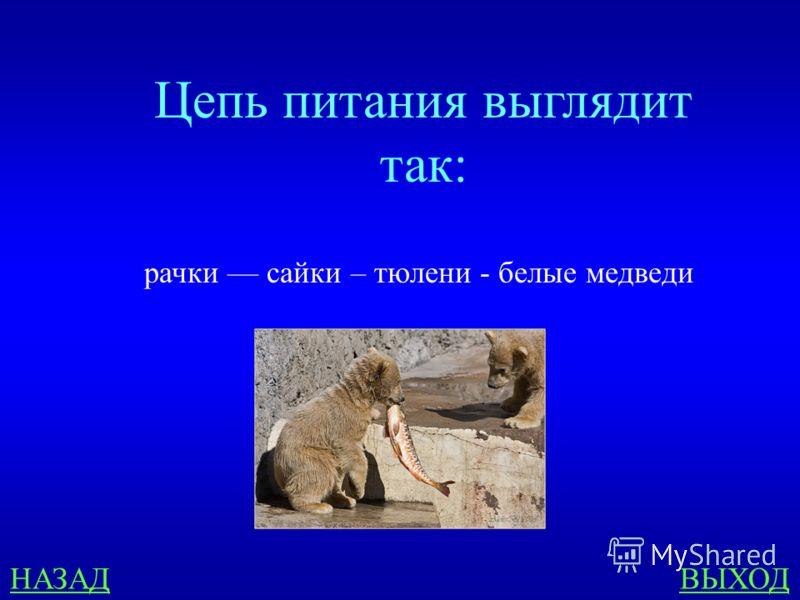 Схема питания характерная для черноморского побережья кавказа фото 498