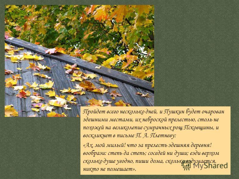 Пройдет всего несколько дней, и Пушкин будет очарован здешними местами, их неброской прелестью, столь не похожей на великолепие сумрачных рощ Псковщины, и воскликнет в письме П. А. Плетневу: «Ах, мой милый! что за прелесть здешняя деревня! вообрази: