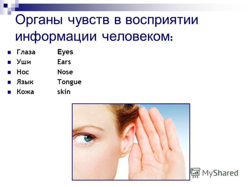 Органы чувств в восприятии информации человеком : Глаза Eyes УшиEars НосNose ЯзыкTongue Кожаskin