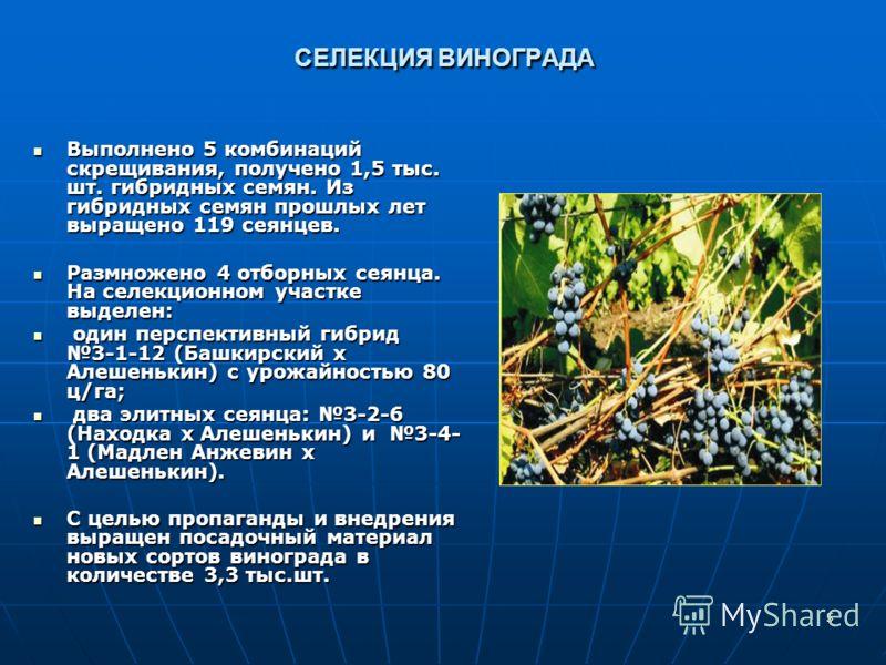 5 СЕЛЕКЦИЯ ВИНОГРАДА Выполнено 5 комбинаций скрещивания, получено 1,5 тыс. шт. гибридных семян. Из гибридных семян прошлых лет выращено 119 сеянцев. Выполнено 5 комбинаций скрещивания, получено 1,5 тыс. шт. гибридных семян. Из гибридных семян прошлых