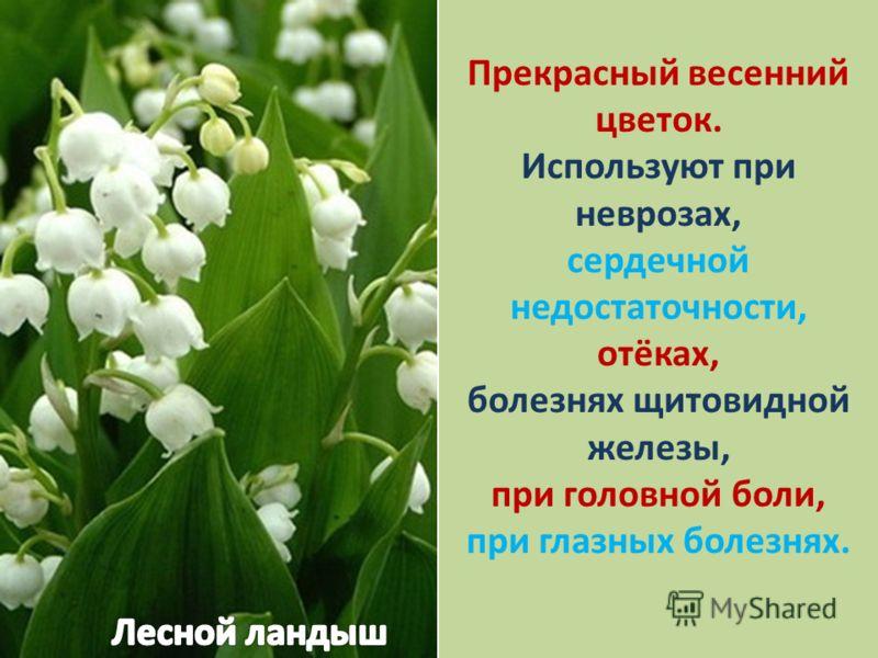 Прекрасный весенний цветок. Используют при неврозах, сердечной недостаточности, отёках, болезнях щитовидной железы, при головной боли, при глазных болезнях.