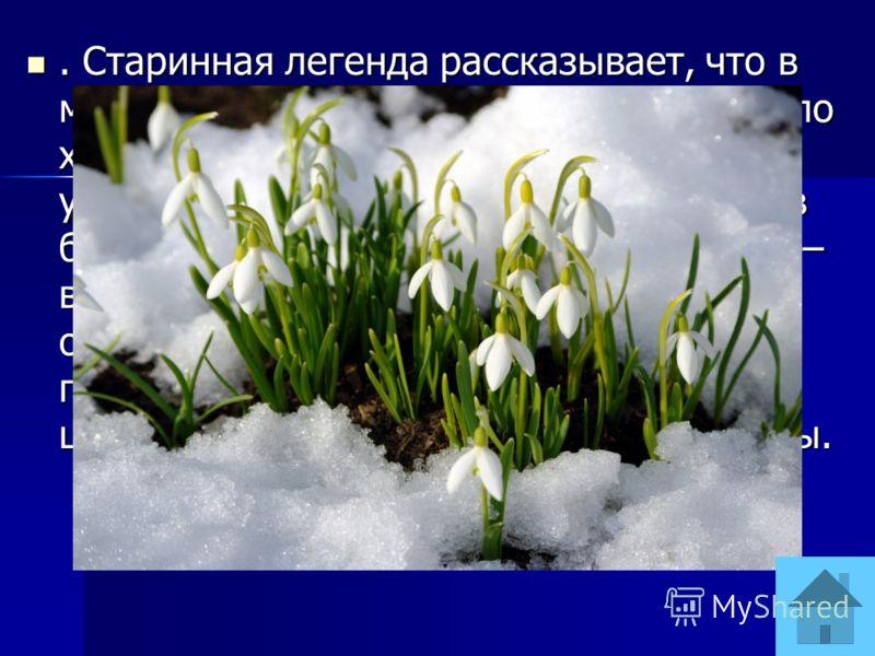 . Старинная легенда рассказывает, что в момент изгнания из рая Адама и Евы было холодно, шёл снег. Ева замёрзла. В утешение ей несколько снежных хлопьев были превращены в цветы подснежника – вестника весны. Увидев эти цветы, Ева обрадовалась и повесе
