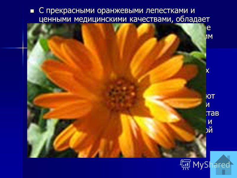 С прекрасными оранжевыми лепестками и ценными медицинскими качествами, обладает чудодейственной исцеляющей силой. Древние египтяне считали этот цветок омолаживающим растением. В цветках уникальный набор эфирных масел, фитонцидов, органических кислот