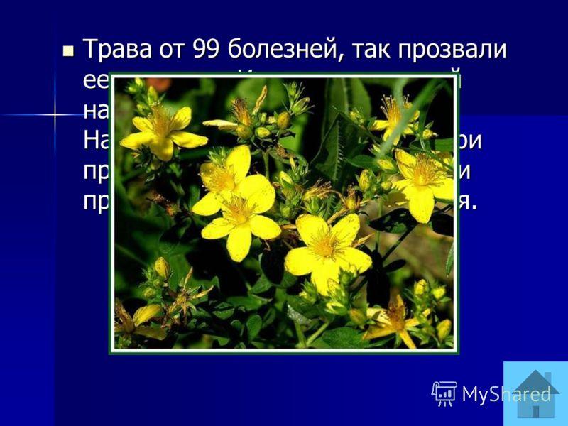 Трава от 99 болезней, так прозвали ее в народе. Известен в русской народной медицине с 16 века. Настойку пили перед обедом, при простуде, при болезнях сердца и просто для укрепления здоровья. Трава от 99 болезней, так прозвали ее в народе. Известен в