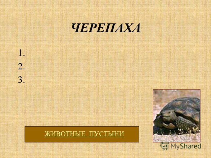 ЧЕРЕПАХА 1. 2. 3. ЖИВОТНЫЕ ПУСТЫНИ