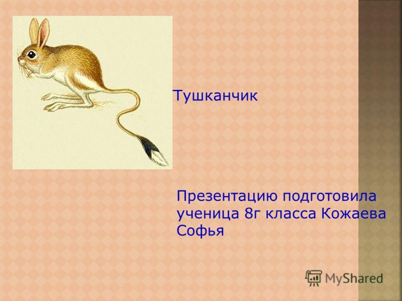 ТТушканчик Презентацию подготовила ученица 8г класса Кожаева Софья