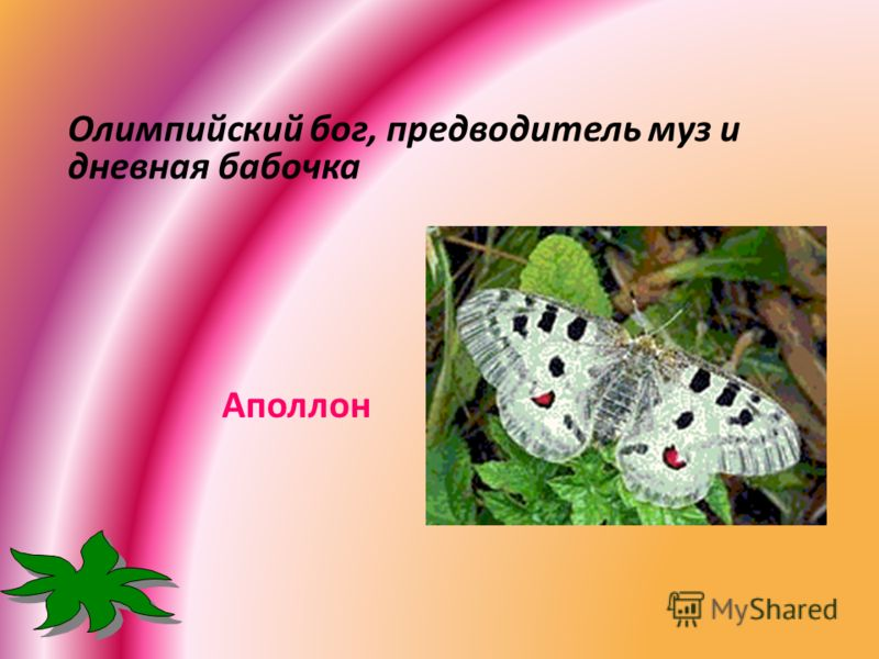 Олимпийский бог, предводитель муз и дневная бабочка Аполлон
