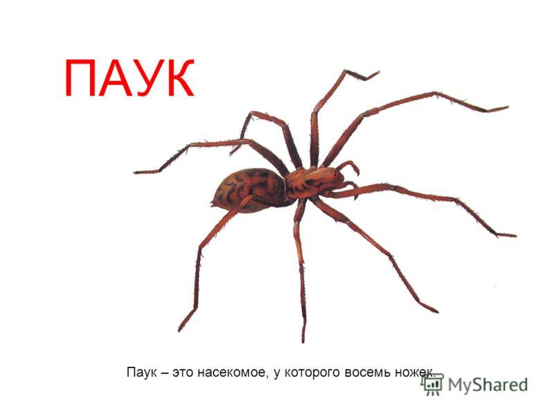 ПАУК Паук – это насекомое, у которого восемь ножек.
