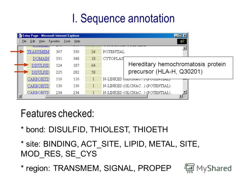 I. Sequence annotation Hereditary hemochromatosis protein precursor (HLA-H, Q30201) Features checked: * bond: DISULFID, THIOLEST, THIOETH * site: BINDING, ACT_SITE, LIPID, METAL, SITE, MOD_RES, SE_CYS * region: TRANSMEM, SIGNAL, PROPEP