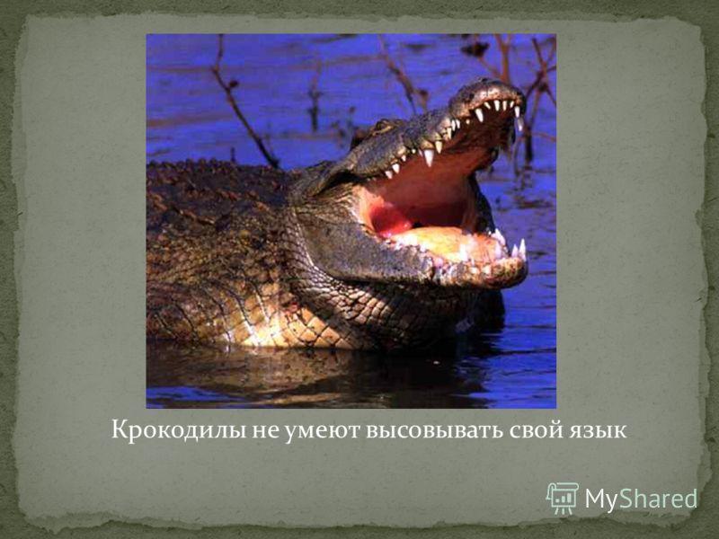 Крокодилы не умеют высовывать свой язык