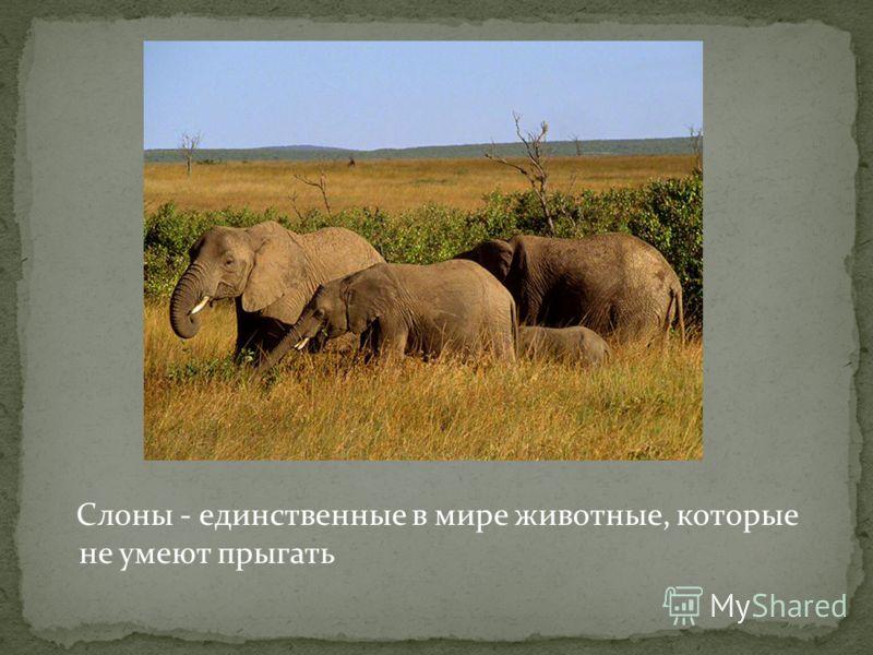 Слоны - единственные в мире животные, которые не умеют прыгать
