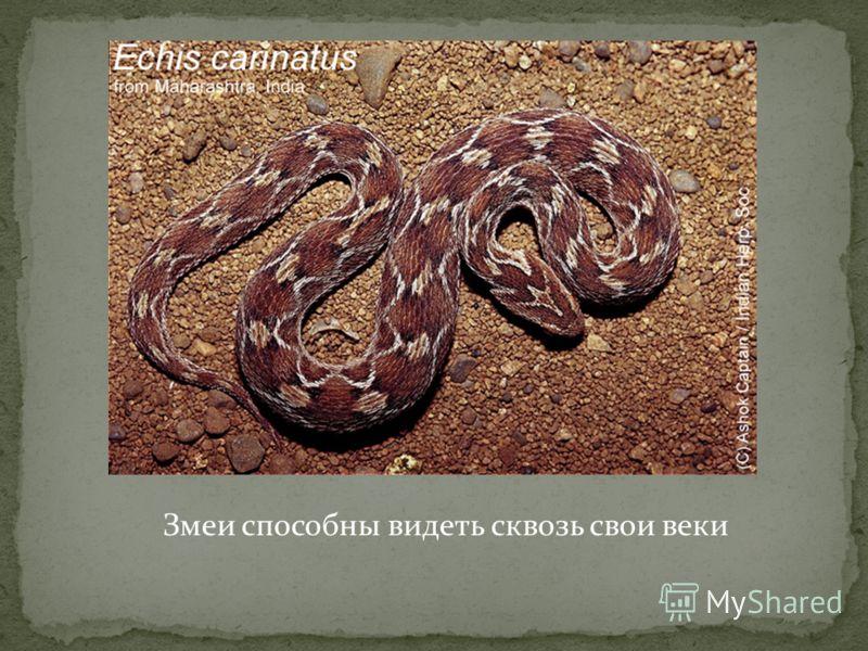 Змеи способны видеть сквозь свои веки