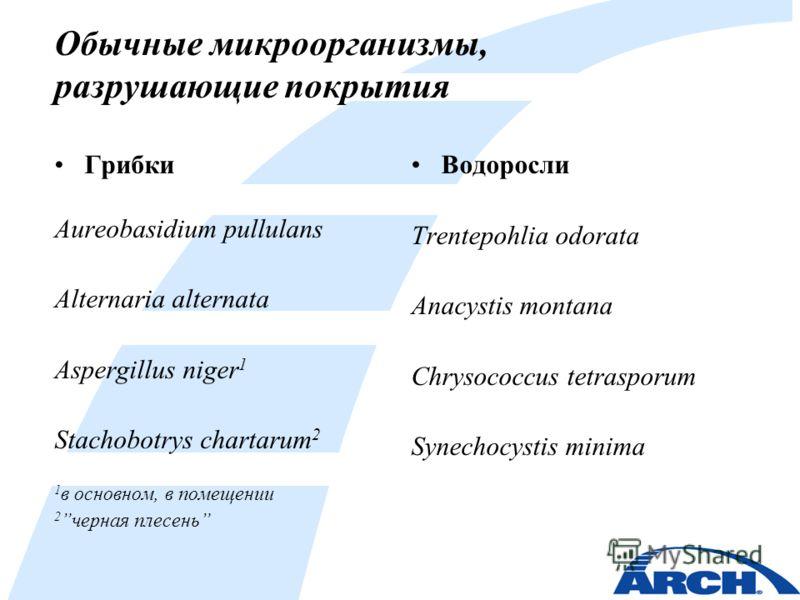 Обычные микроорганизмы, разрушающие покрытия Грибки Aureobasidium pullulans Alternaria alternata Aspergillus niger 1 Stachobotrys chartarum 2 1 в основном, в помещении 2черная плесень Водоросли Trentepohlia odorata Anacystis montana Chrysococcus tetr