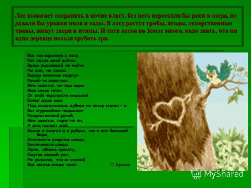 Трудно представить себе Землю без лесов. Леса – легкие нашей планеты. Лес – прекрасен во все времена года. Леса украшают землю. «Они учат человека понимать прекрасное и внушают ему величавое настроение», - писал А.П. Чехов. Березы желтою резьбой Блес