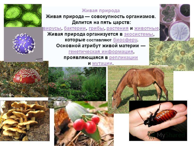 Живая природа Живая природа совокупность организмов. Делится на пять царств: вирусы, бактерии, грибы, растения и животные.вирусыбактериигрибырастенияживотные Живая природа организуется в экосистемы,экосистемы которые составляют биосферу.биосферу Осно