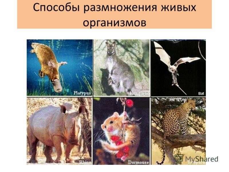 Способы размножения живых организмов