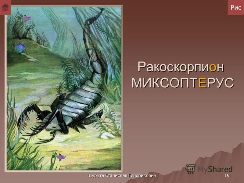 Шурута Станислав Гендрикович 18 Трилобиты В морях силура было много кораллов, брахиопод (широко распространенных в древности, заключенных в раковину животных, внешне напоминающих моллюсков), иглокожих, особенно морских лилий. Почти вся жизнь была сос