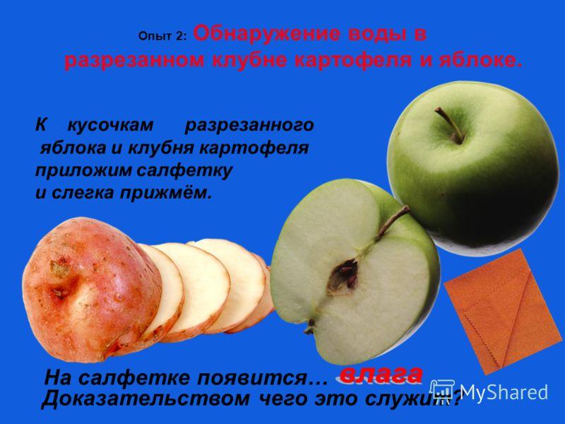 Опыт 2: Обнаружение воды в разрезанном клубне картофеля и яблоке. К кусочкам разрезанного яблока и клубня картофеля приложим салфетку и слегка прижмём. На салфетке появится… Доказательством чего это служит?