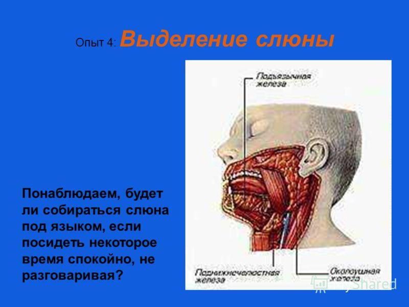 Опыт 4: Выделение слюны Понаблюдаем, будет ли собираться слюна под языком, если посидеть некоторое время спокойно, не разговаривая?