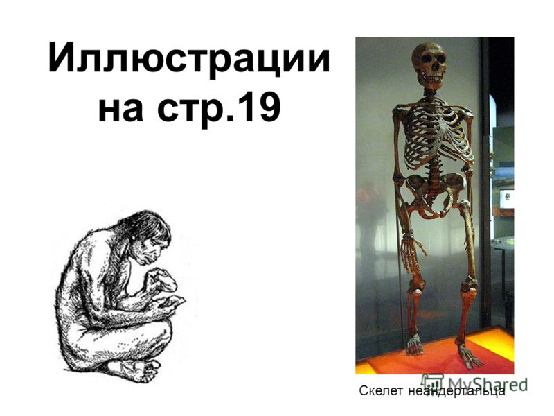 Скелет неандертальца Иллюстрации на стр.19