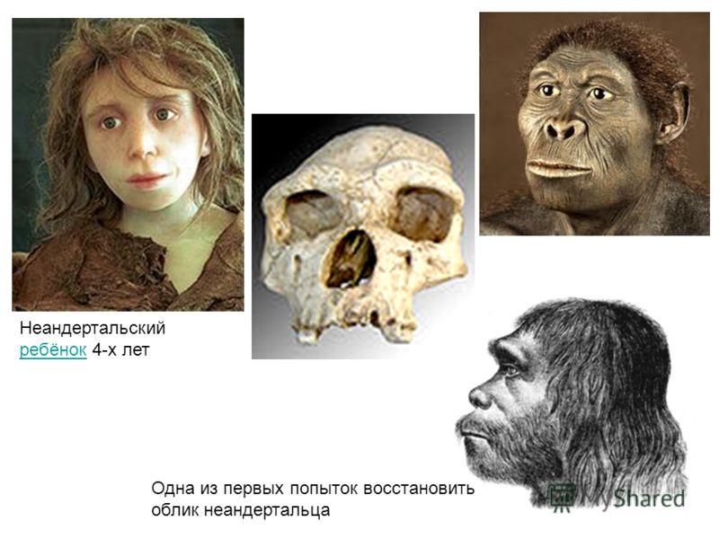 Неандертальский ребёнок 4-х лет ребёнок Одна из первых попыток восстановить облик неандертальца
