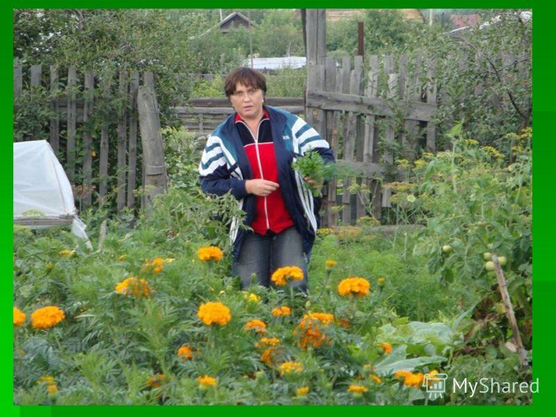 Сад как сад – всего 6 соток, Что, друзья, не говори, Я нашла себе работу От зари и до зари.