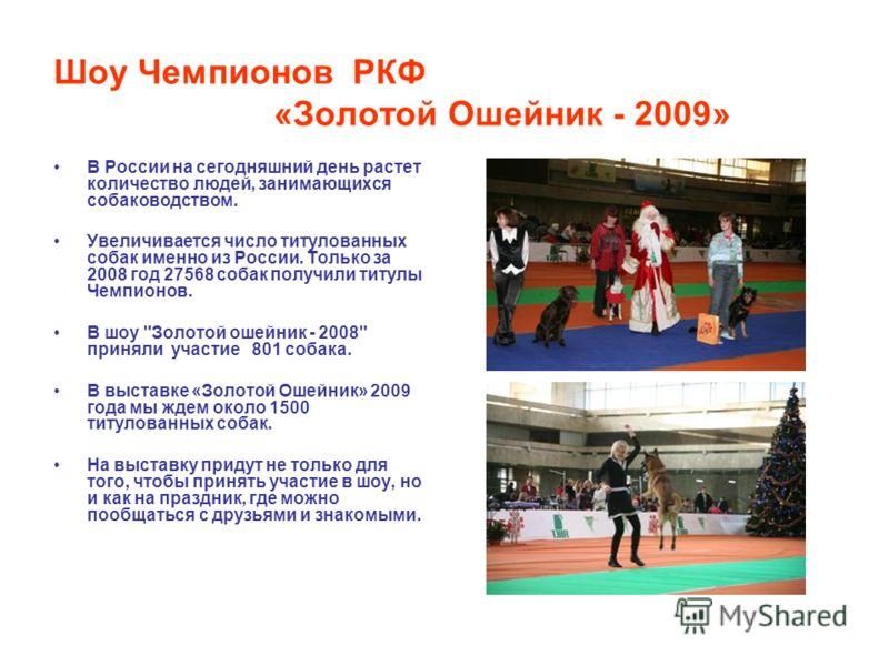 Шоу Чемпионов РКФ «Золотой Ошейник - 2009» В России на сегодняшний день растет количество людей, занимающихся собаководством. Увеличивается число титулованных собак именно из России. Только за 2008 год 27568 собак получили титулы Чемпионов. В шоу