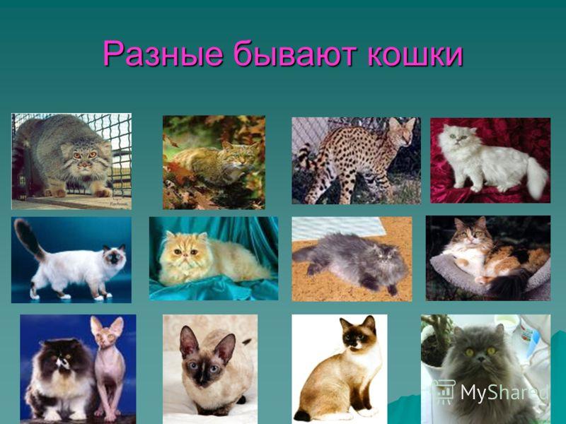 Разные бывают кошки