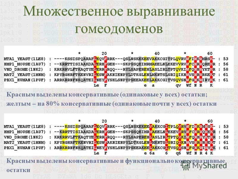 Множественное выравнивание гомеодоменов Красным выделены консервативные (одинаковые у всех) остатки; желтым – на 80% консервативные (одинаковые почти у всех) остатки Красным выделены консервативные и функционально консервативные остатки