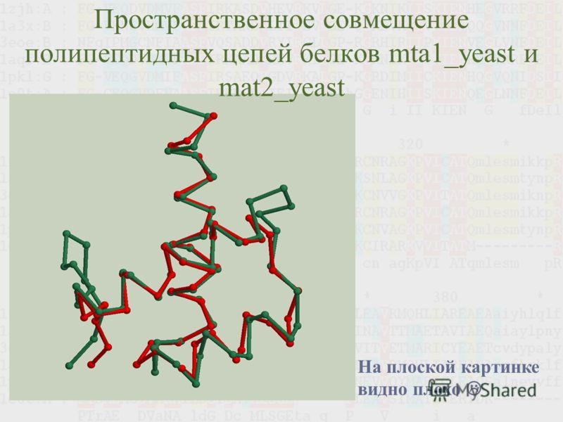 Пространственное совмещение полипептидных цепей белков mta1_yeast и mat2_yeast На плоской картинке видно плохо