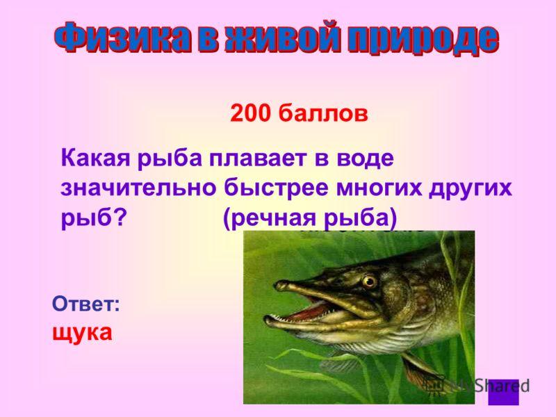 100 баллов При выходе из воды животные встряхиваются. Какой закон физики используется ими при этом? Ответ: закон инерции