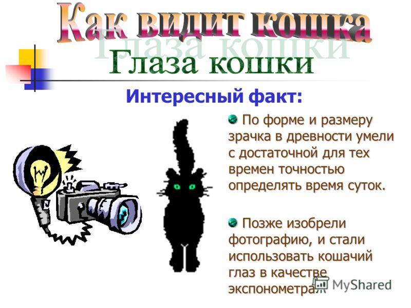 Интересный факт: По форме и размеру зрачка в древности умели с достаточной для тех времен точностью определять время суток. Позже изобрели фотографию, и стали использовать кошачий глаз в качестве экспонометра.