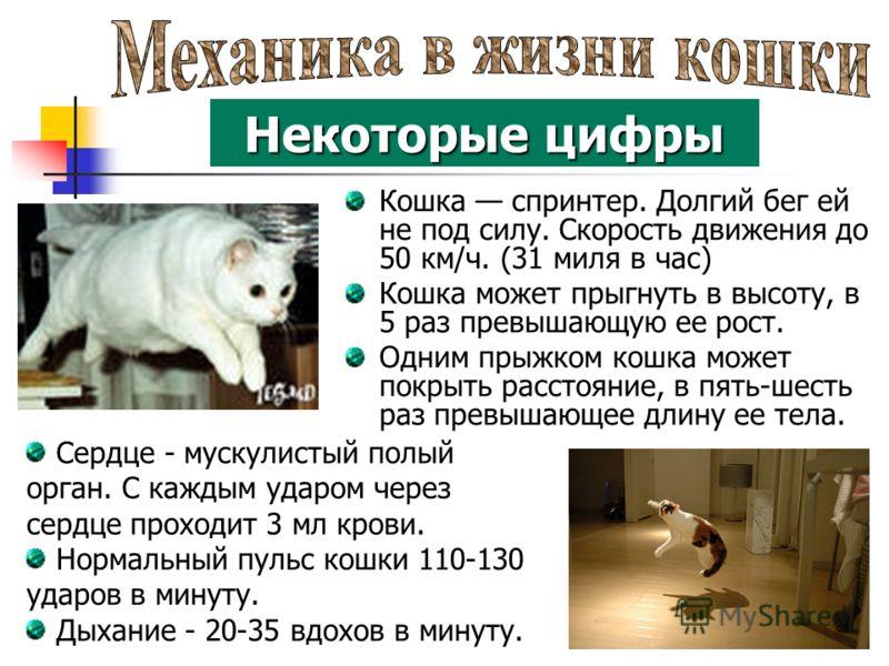 Кошка спринтер. Долгий бег ей не под силу. Скорость движения до 50 км/ч. (31 миля в час) Кошка может прыгнуть в высоту, в 5 раз превышающую ее рост. Одним прыжком кошка может покрыть расстояние, в пять-шесть раз превышающее длину ее тела. Некоторые ц