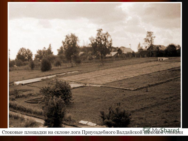 Стоковые площадки на склоне лога Приусадебного Валдайской стоковой станции