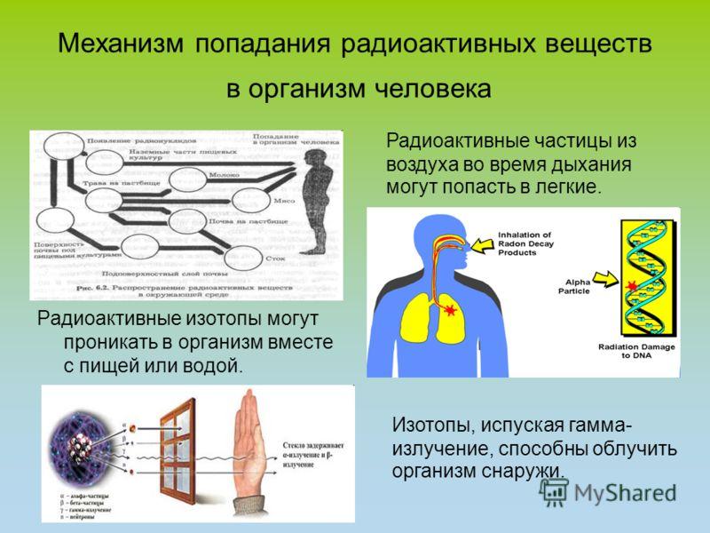 Механизм попадания радиоактивных веществ в организм человека Радиоактивные изотопы могут проникать в организм вместе с пищей или водой. Радиоактивные частицы из воздуха во время дыхания могут попасть в легкие. Изотопы, испуская гамма- излучение, спос
