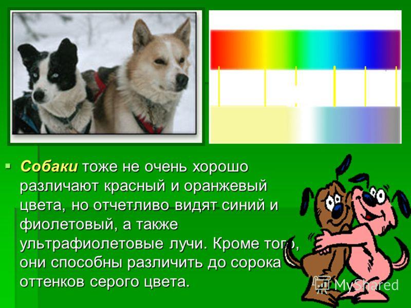 Собаки тоже не очень хорошо различают красный и оранжевый цвета, но отчетливо видят синий и фиолетовый, а также ультрафиолетовые лучи. Кроме того, они способны различить до сорока оттенков серого цвета. Собаки тоже не очень хорошо различают красный и