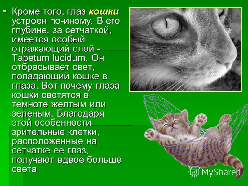 Кроме того, глаз кошки устроен по-иному. В его глубине, за сетчаткой, имеется особый отражающий слой - Tapetum lucidum. Он отбрасывает свет, попадающий кошке в глаза. Вот почему глаза кошки светятся в темноте желтым или зеленым. Благодаря этой особен