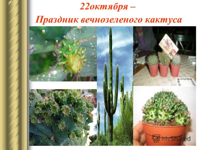 22октября – Праздник вечнозеленого кактуса
