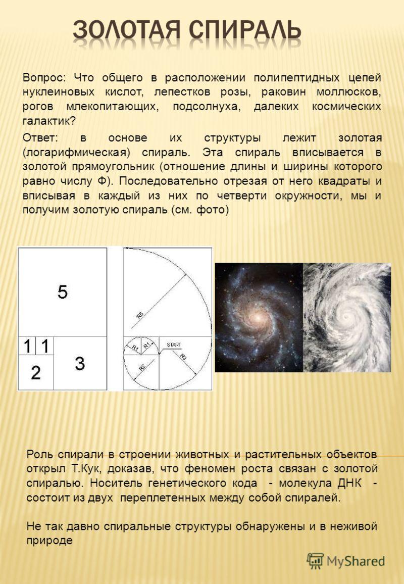 Вопрос: Что общего в расположении полипептидных цепей нуклеиновых кислот, лепестков розы, раковин моллюсков, рогов млекопитающих, подсолнуха, далеких космических галактик? Ответ: в основе их структуры лежит золотая (логарифмическая) спираль. Эта спир