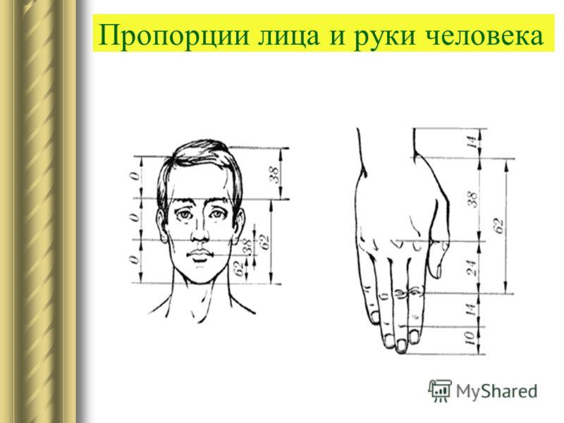 Пропорции лица и руки человека