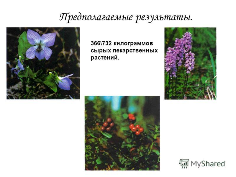 Предполагаемые результаты. 366\732 килограммов сырых лекарственных растений.