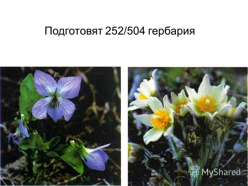 Подготовят 252/504 гербария