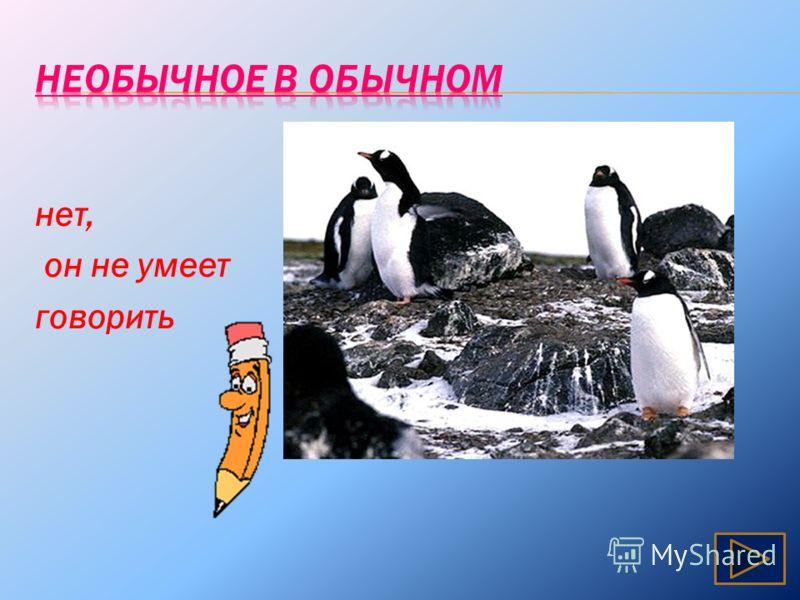 Может ли пингвин назвать себя птицей?