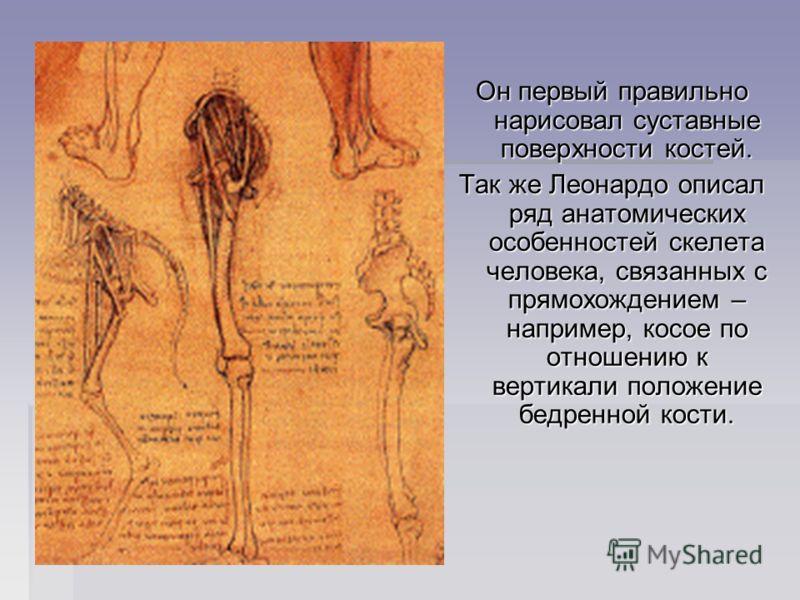 Он первый правильно нарисовал суставные поверхности костей. Так же Леонардо описал ряд анатомических особенностей скелета человека, связанных с прямохождением – например, косое по отношению к вертикали положение бедренной кости.