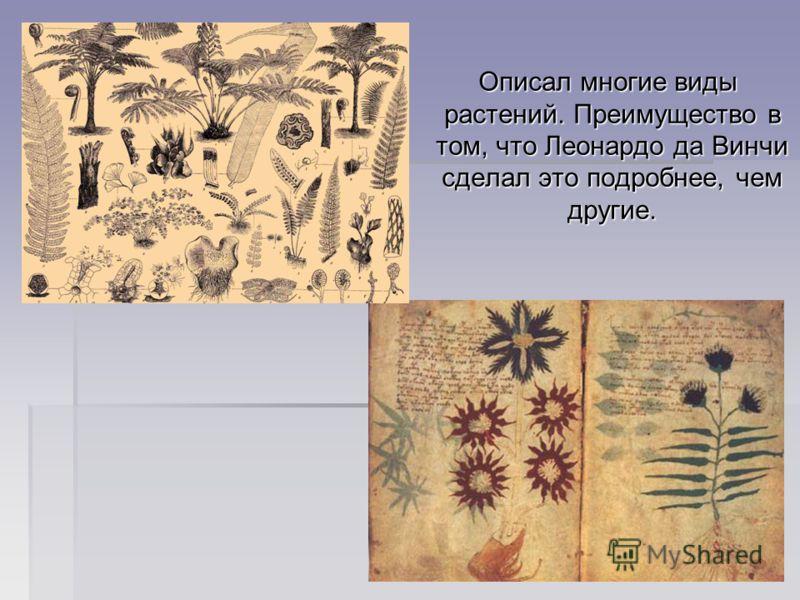Описал многие виды растений. Преимущество в том, что Леонардо да Винчи сделал это подробнее, чем другие. Описал многие виды растений. Преимущество в том, что Леонардо да Винчи сделал это подробнее, чем другие.