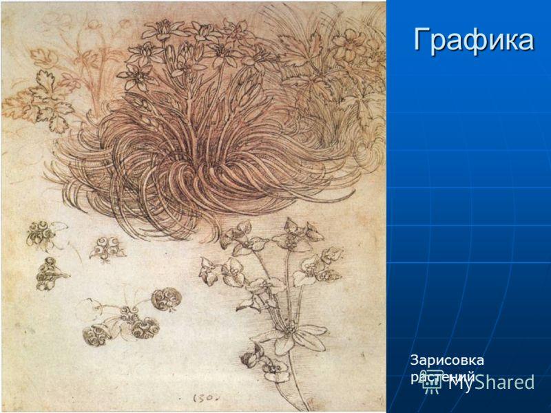 Графика Зарисовка растений