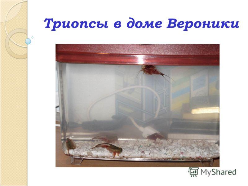 Триопсы в доме Вероники